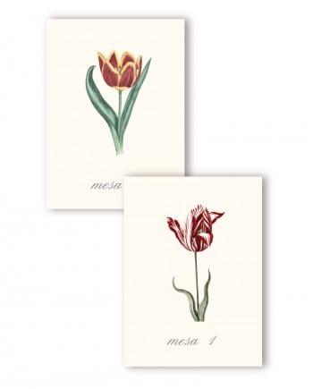 numeros-tulipanes